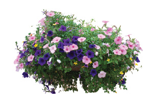"10"" Assorted Hanging Baskets"